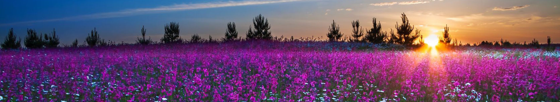 hypnotherapy sunrise blossomin field